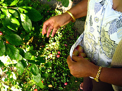 Fruit picker, by San Sharma, with Creative Commons licence