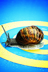 Snail on Target, by Jaysk, with Creative Commons licence (Attribution-Noncommercial-Share Alike 2.0 Generic)